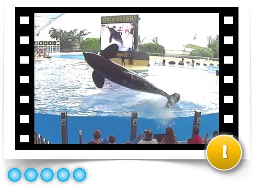 whale-tank